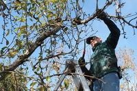 Les propriétaires de la France ont mis en garde sur le défrichement des terres de feu de forêt