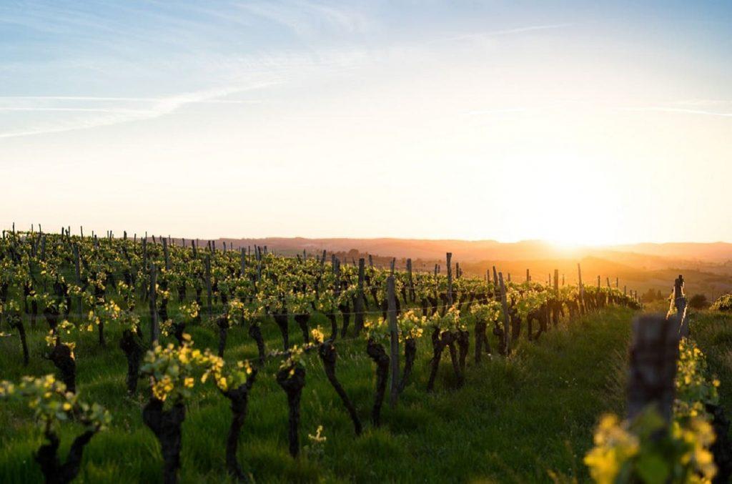 La guerre des mots s'intensifie entre le groupe viticole français et les médecins