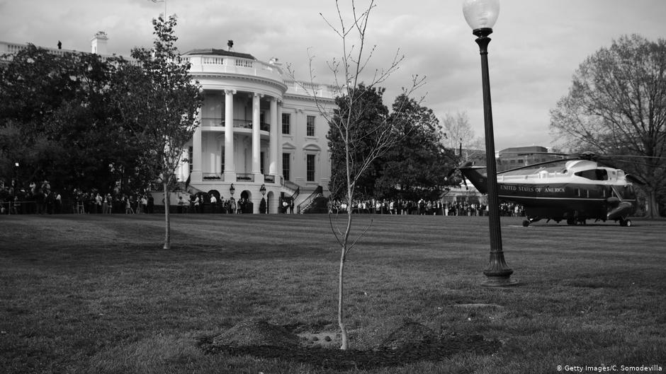 Chêne planté par Macron, Trump est mort   Nouvelles   DW