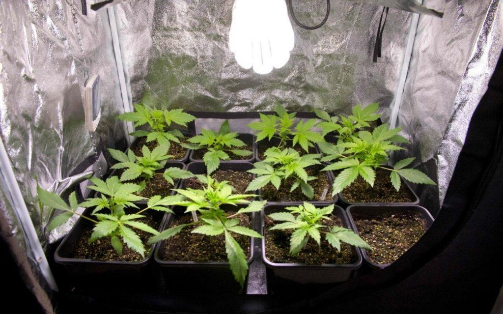 """La France exhorte les experts gouvernementaux à légaliser le cannabis et à """"reprendre le contrôle"""" du marché noir"""