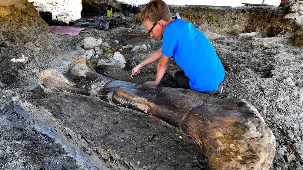 «Découverte majeure»: un os de dinosaure géant mis au jour en France | France Nouvelles