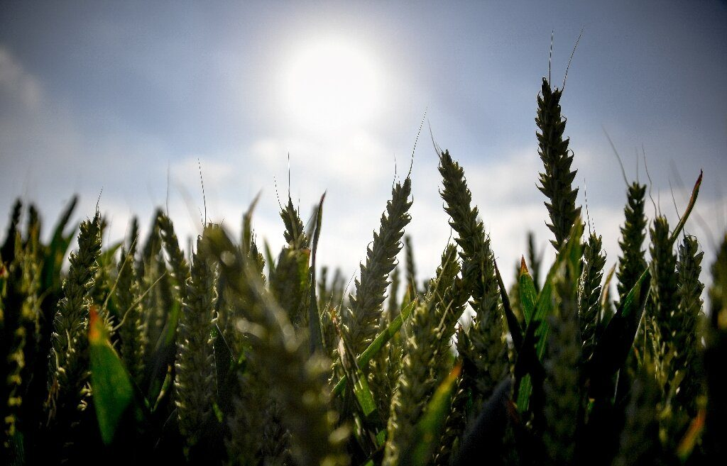 La France révise le record de température de juin jusqu'à 46 degrés