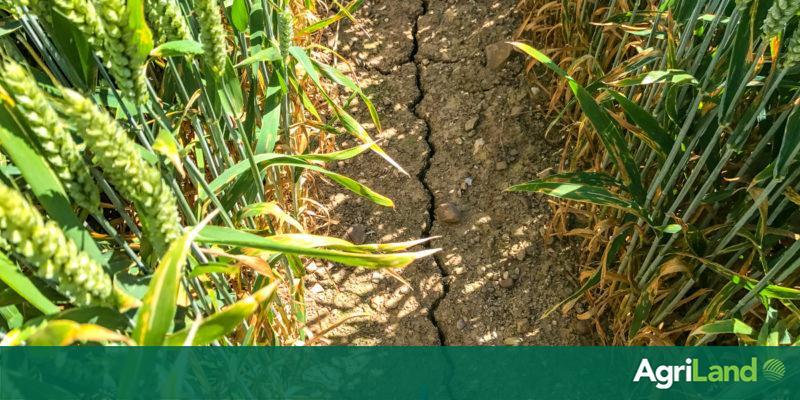 La France demande une avance de 1 milliard d'euros sur la PAC alors que la grave sécheresse se poursuit