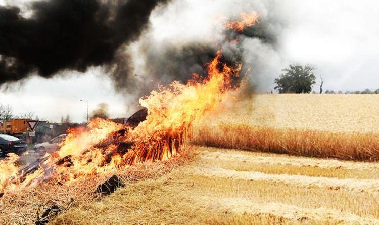 Crise céréalière en France: des responsables français ordonnent aux agriculteurs d'arrêter les récoltes, les incendies détruisant les cultures | Monde | Nouvelles