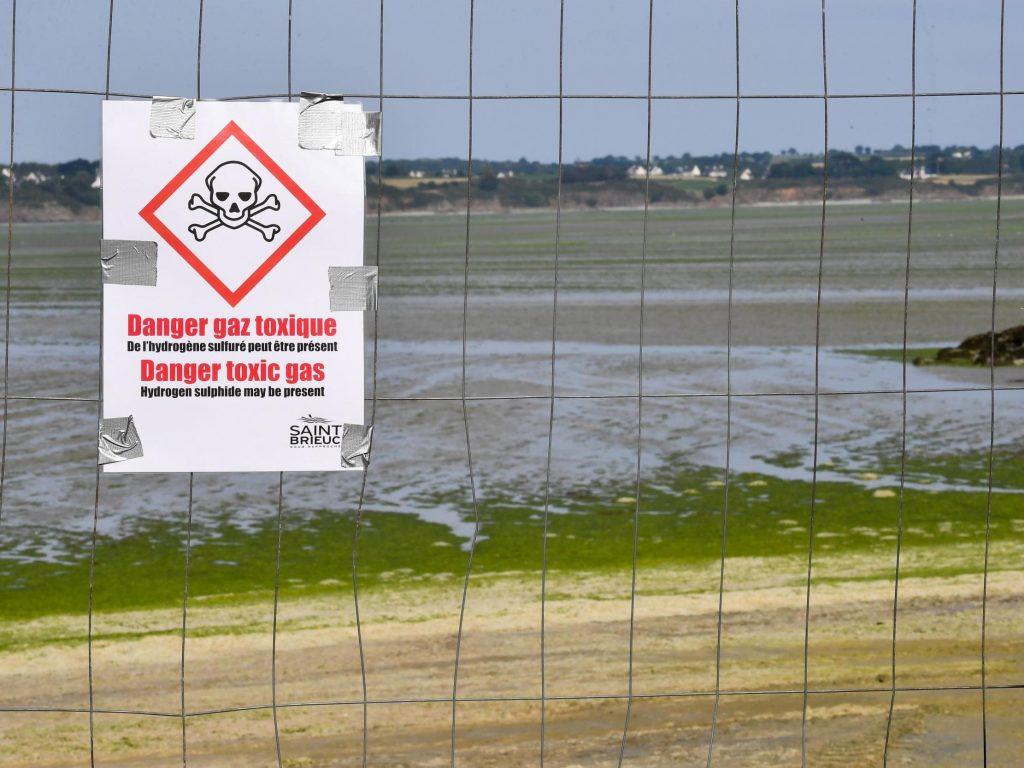 Les touristes britanniques mis en garde contre les algues mortelles en France, responsables de la mort d'un ostréiculteur adolescent