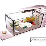 Avez-vous déjà pensé à mettre un poisson dans votre aquarium de tortues?