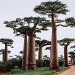 Madagascar : l'île de feu